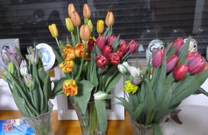 Tulip20170109