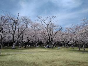 Akebono201803