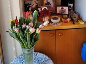 Tulip1002032_2