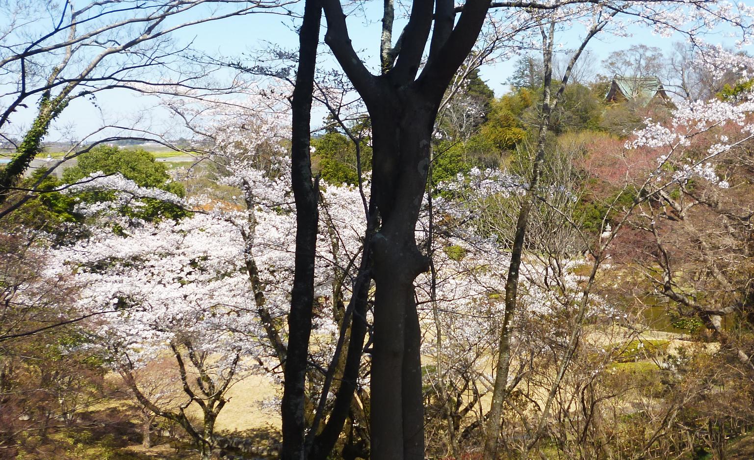 Akebono1904042