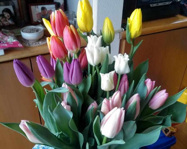 Tulip202002162